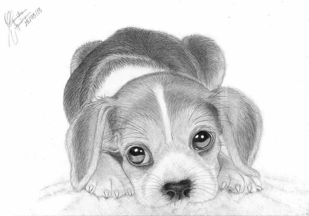 Картинка карандашом щенок