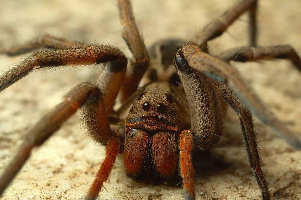 любят рогатый паук картинки компаниях, оказывающих фотоуслуги
