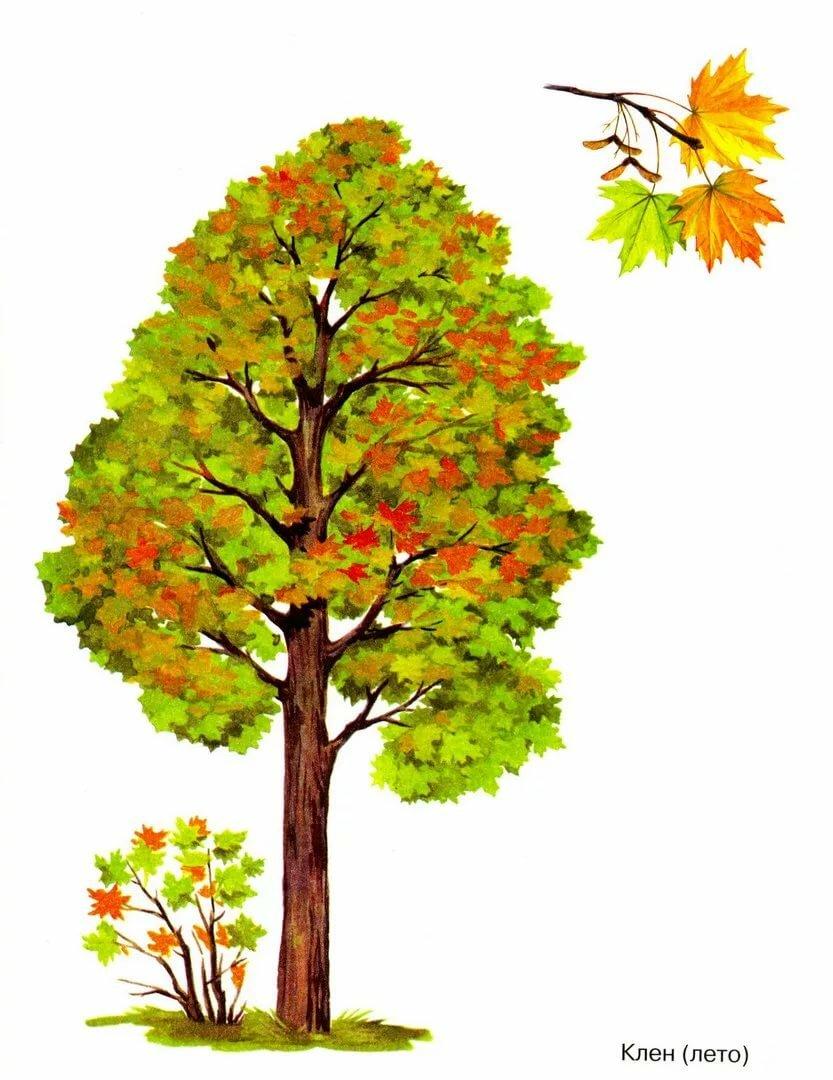 собор картинки деревьев для начальных классов этой причине первые