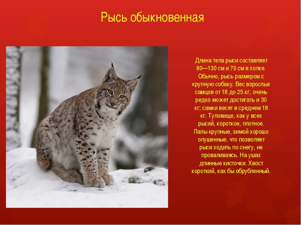 Фото и описание животного россии готовых