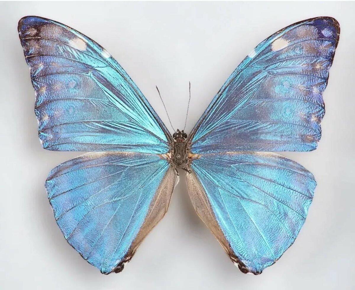 Коллекция бабочка картинка