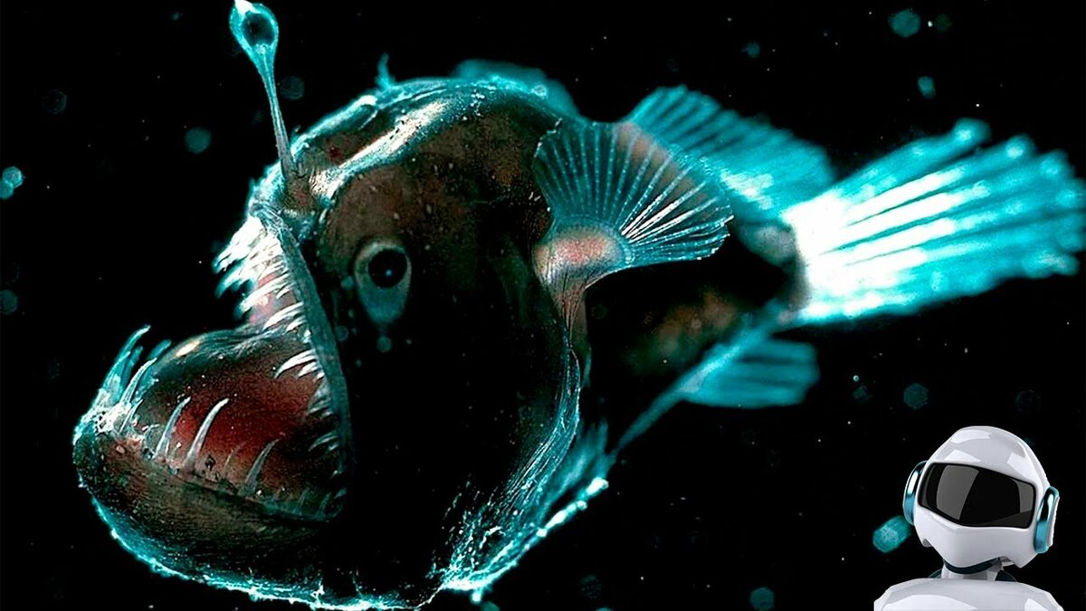 картинки рыба свет верите