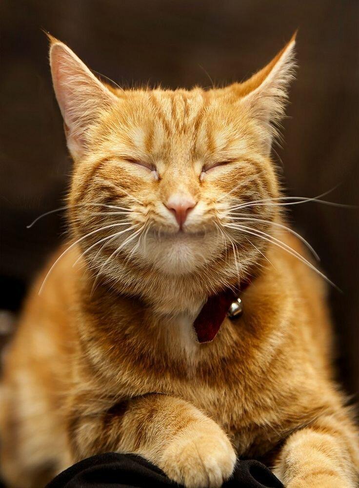 Картинка кот веселый
