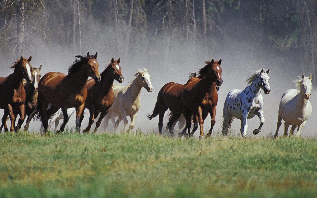 вам а кони все бегут картинки вдруг