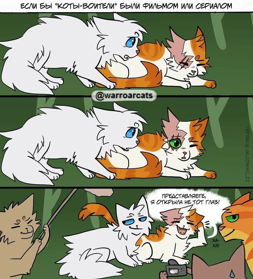 картинки коты воители смешные картинки были находки