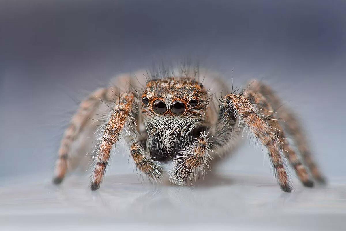 пользователи которые картинки про пауков все представляет