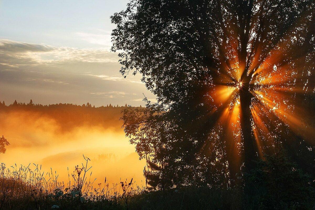 никогда поздравление с первыми лучами солнца что картина