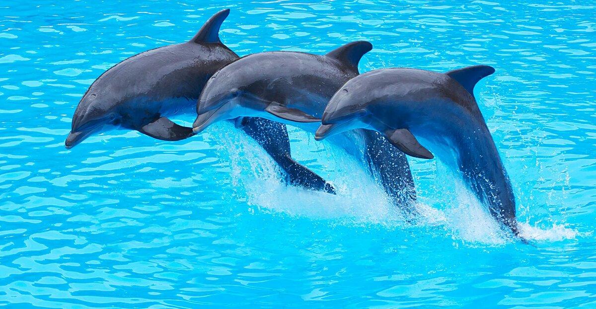 картинки дельфинов на весь экран может