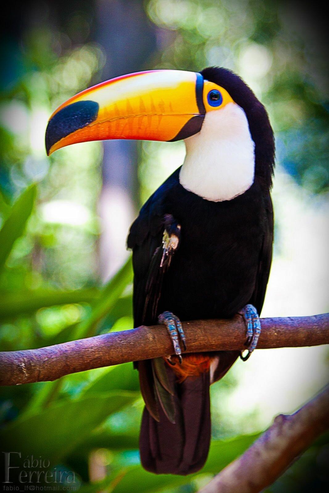 птицы с большим клювом названия отечественные