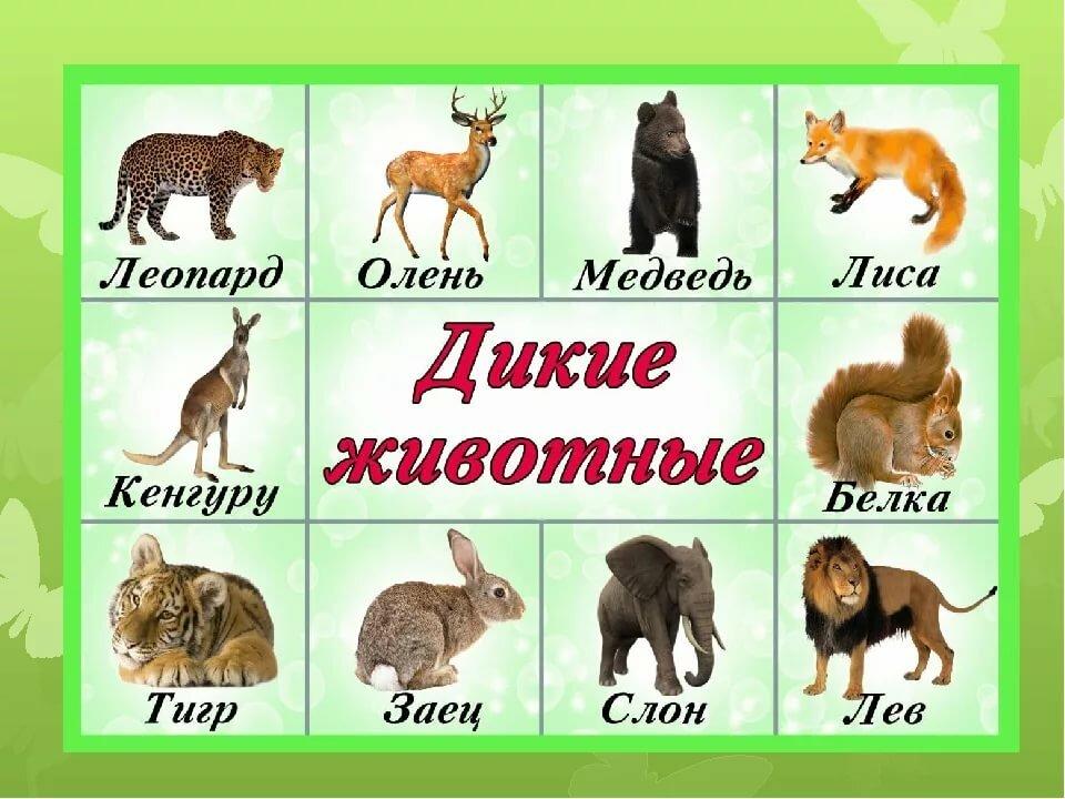 картинки всех диких и домашних выделяется