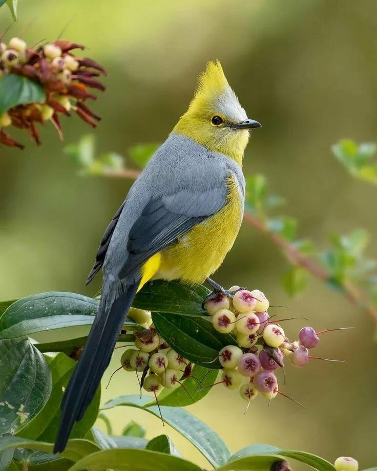 Фото красивых картинок птиц