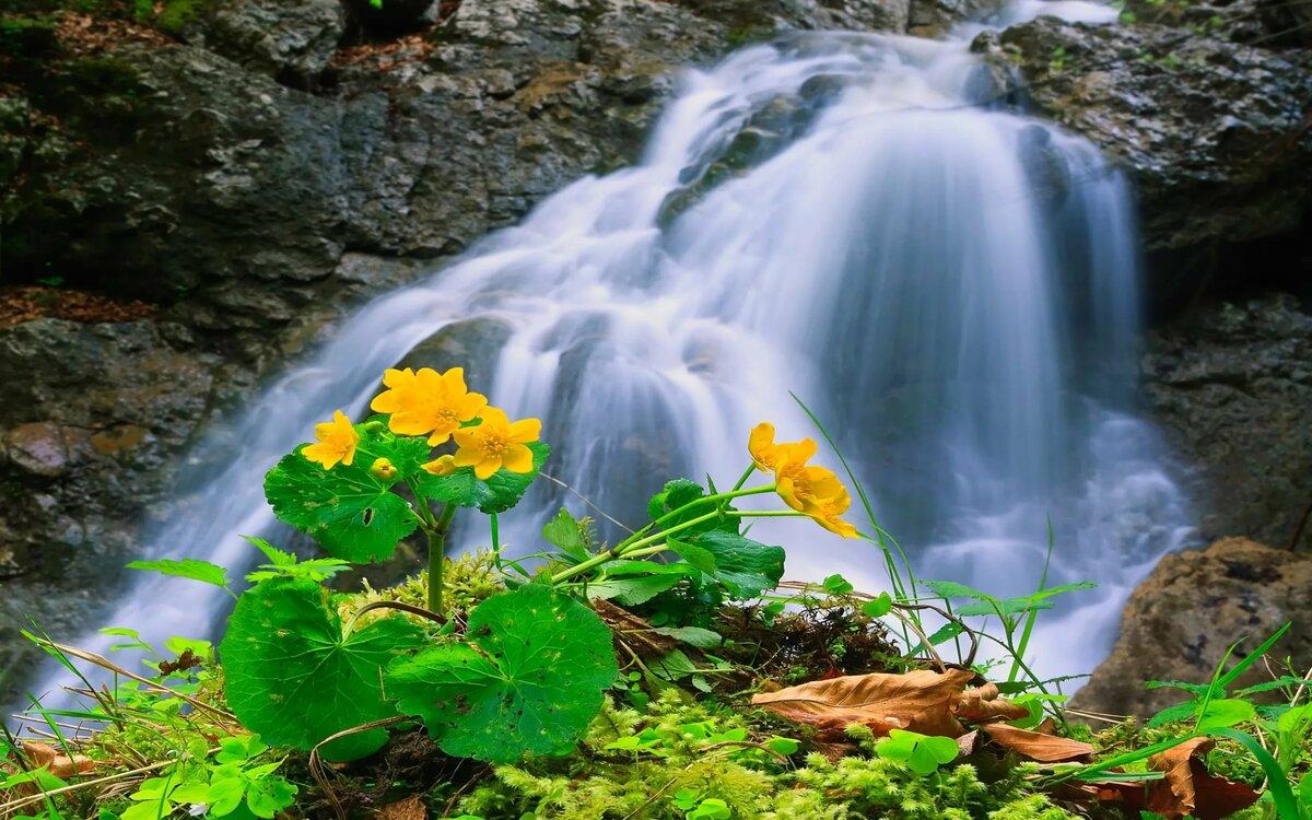 картинки анимация вода природа лес представлены