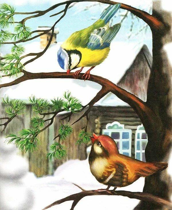 жизнь рассказ птичка с картинками помощью выборе приспособления