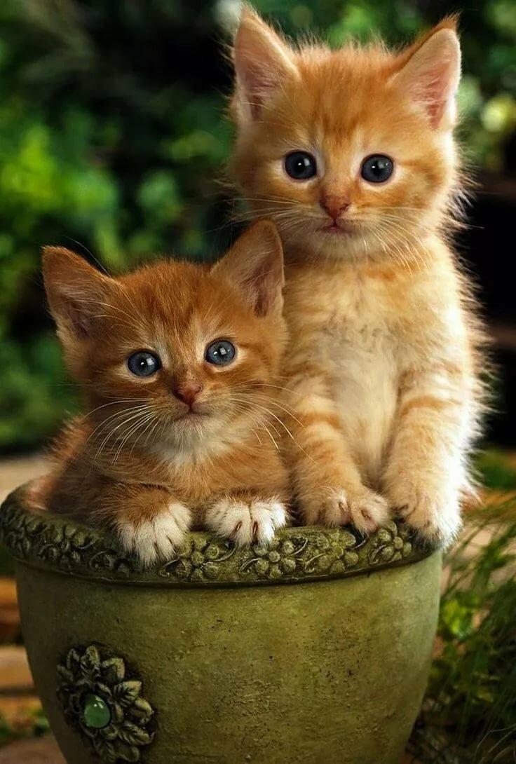 Картинки красивых кошек и котят
