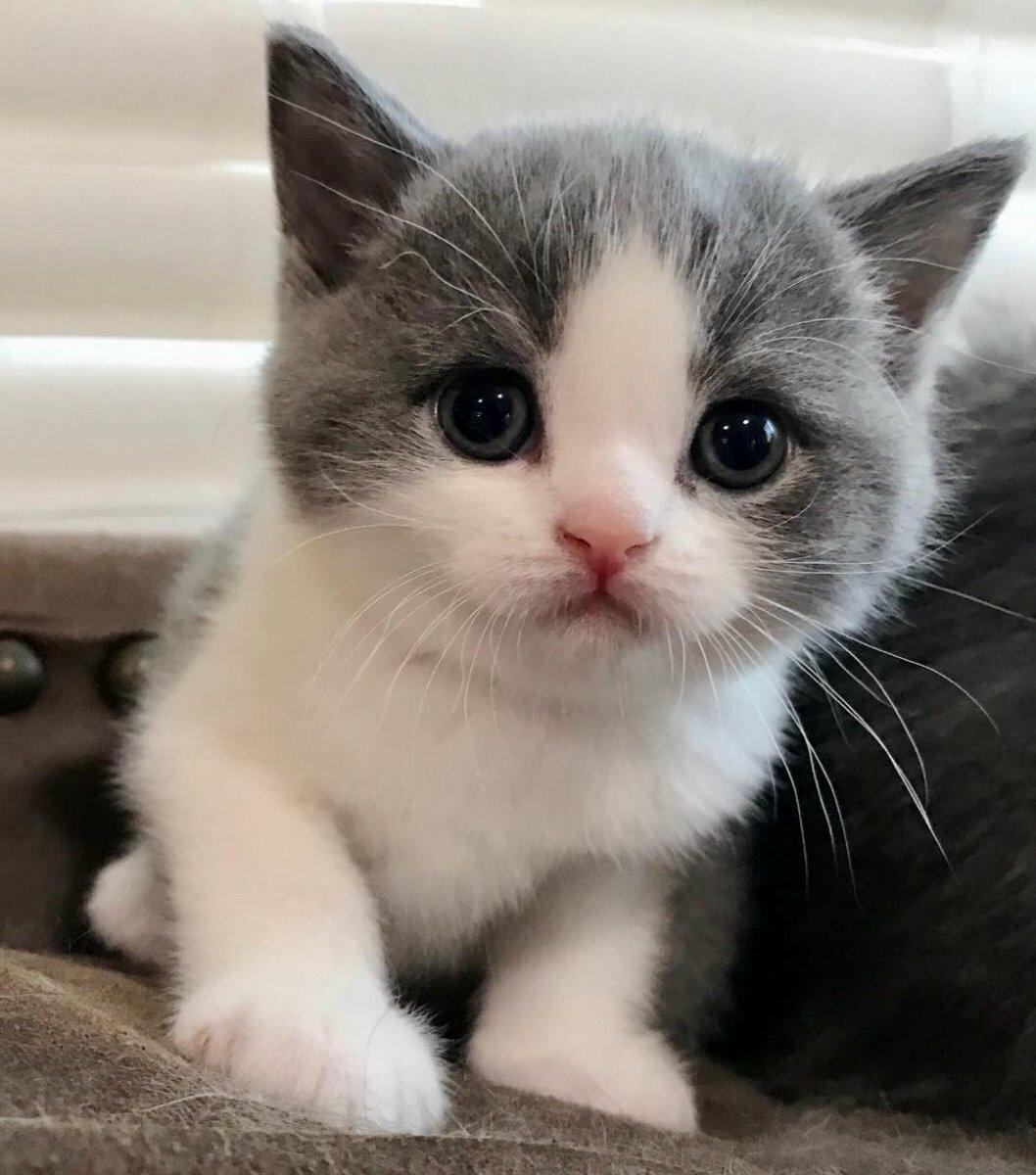 покажи мне картинки котиков если бросить