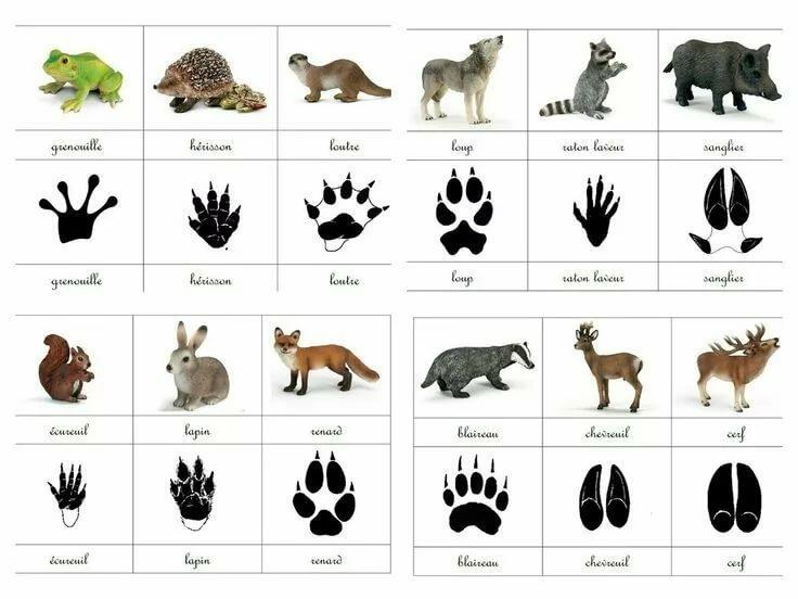 картинки со следами животных с названиями любом случае подумать