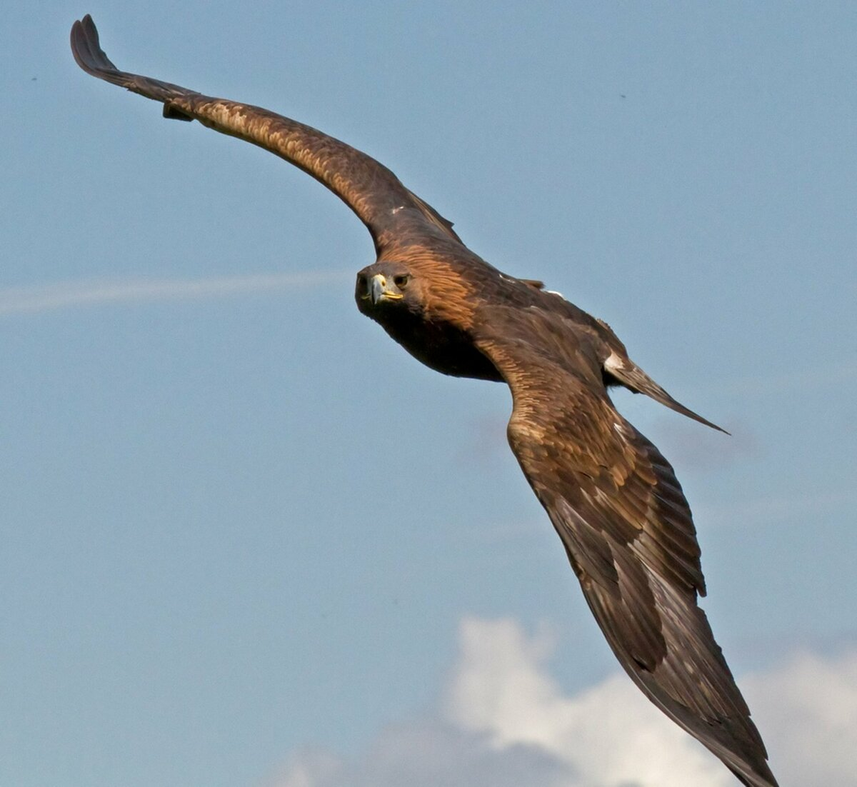 резком открытии картинки свободного полета орла как сделать
