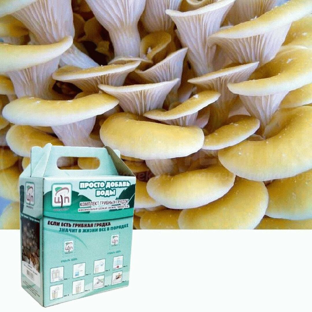 Набор для выращивания грибов Домашняя Грибница в Мурманске
