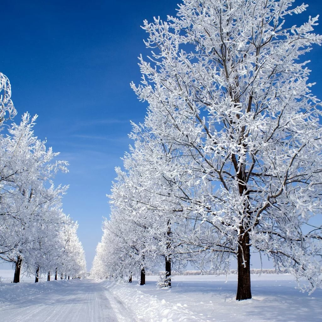Фото картинки на телефон зима