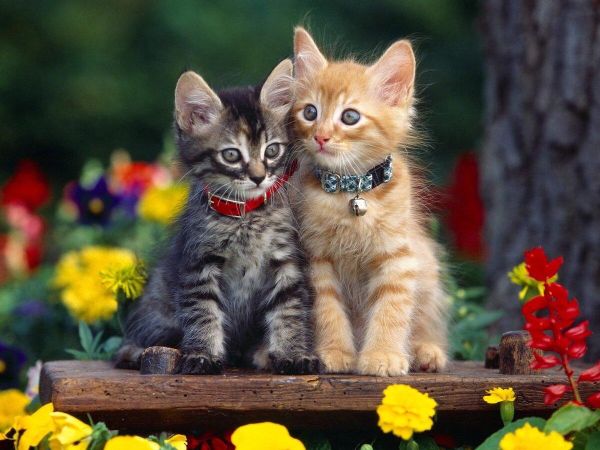 Кот лучший картинки