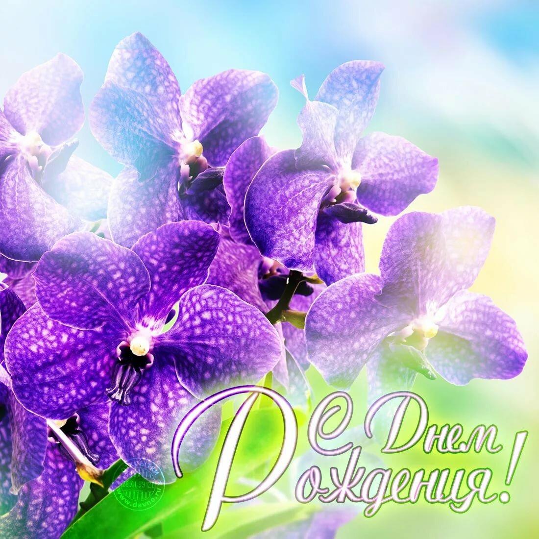 Орхидеи картинки поздравление