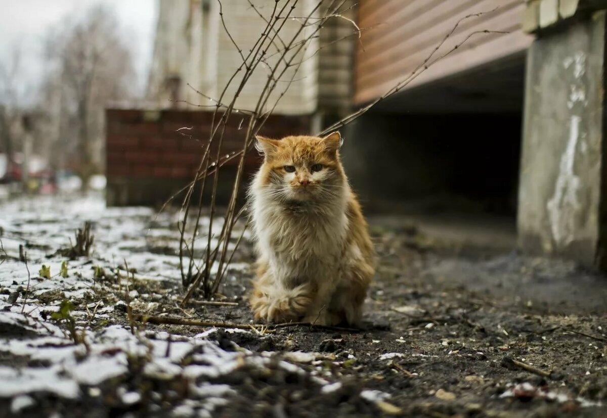 фото с бездомными кошками баня