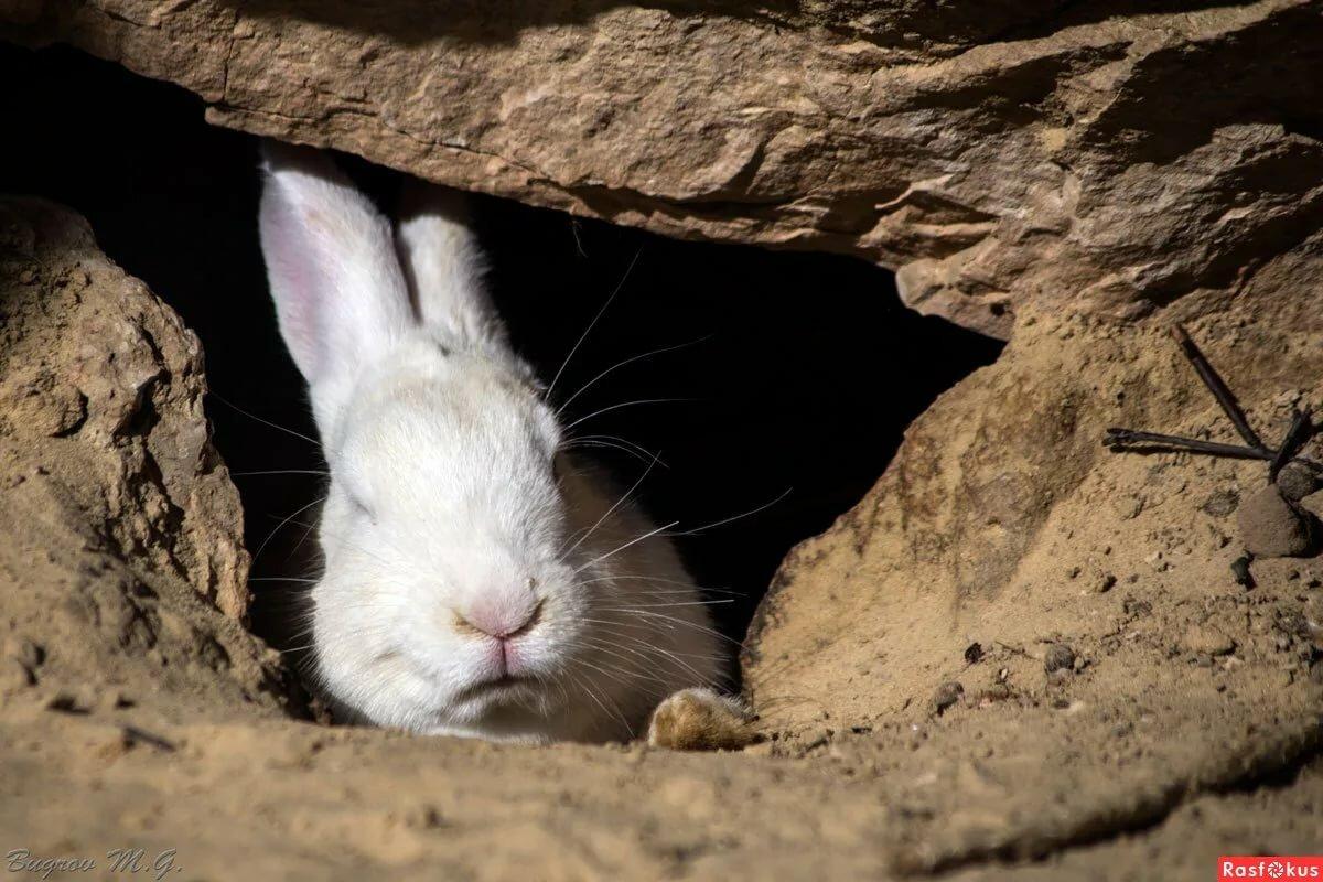фото заяц и его нора картинки для конькового