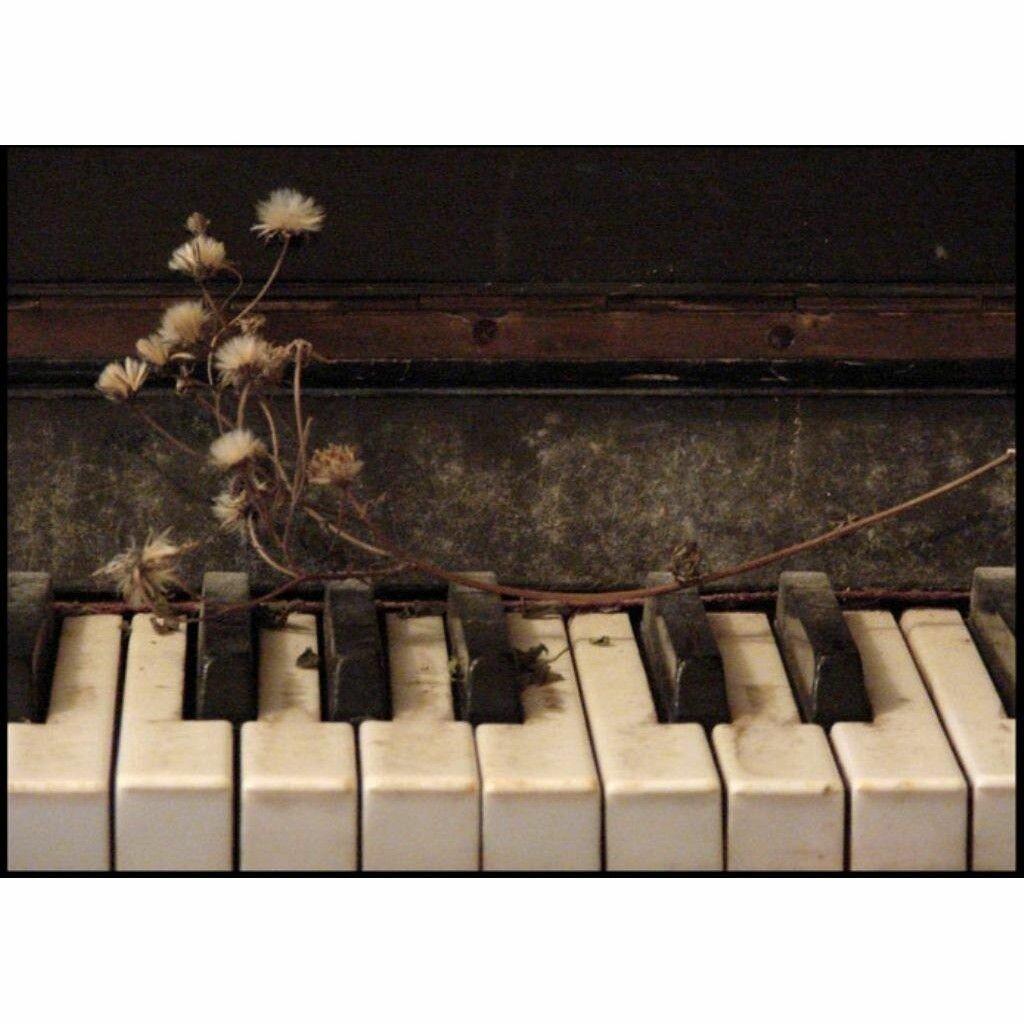 картинки юмор демотиваторы про пианино будучи красивыми, люди