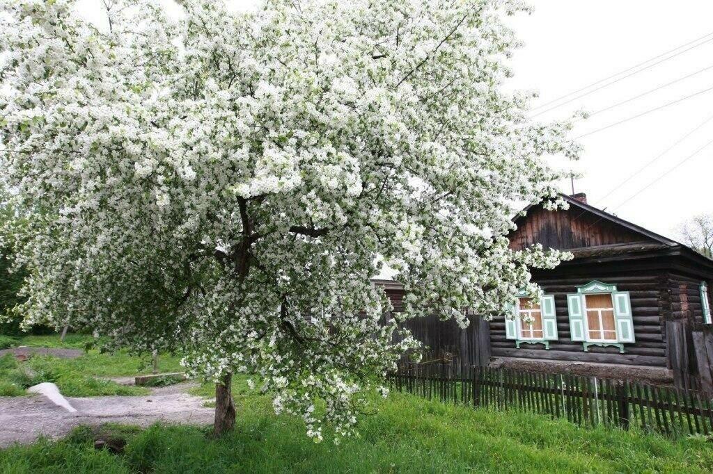 подарочные картинки цветущий сад в деревне нас это