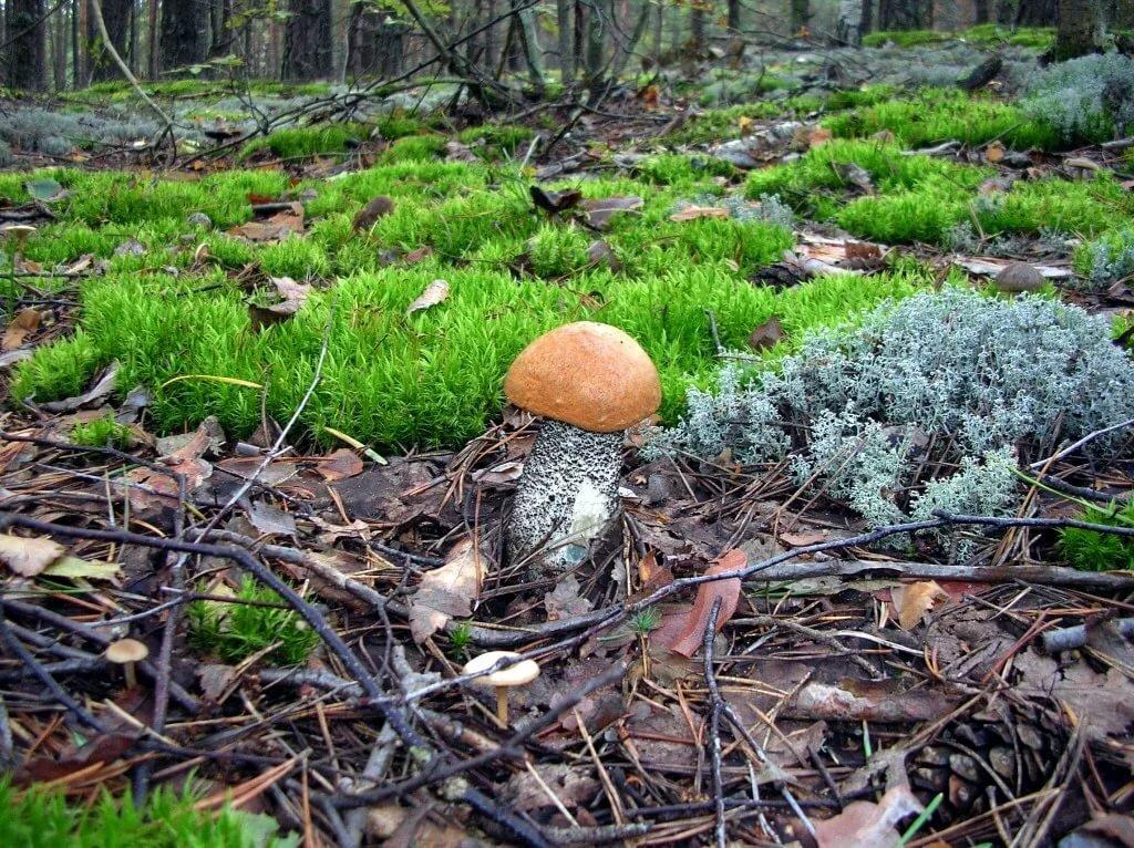 картинки как растут грибы в лесу