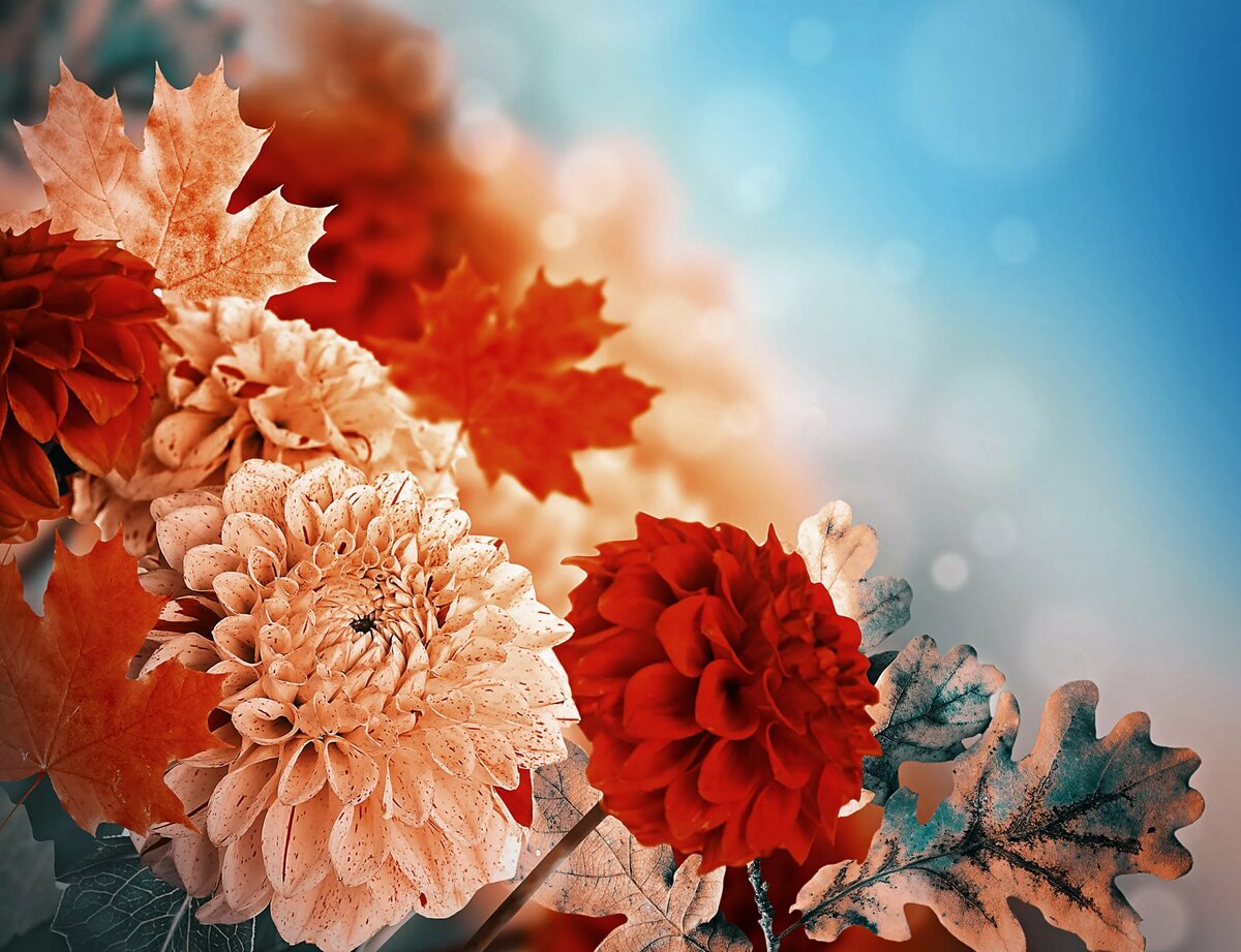 дилеры красивые осенние цветы картинки вертикальные все способы хранения