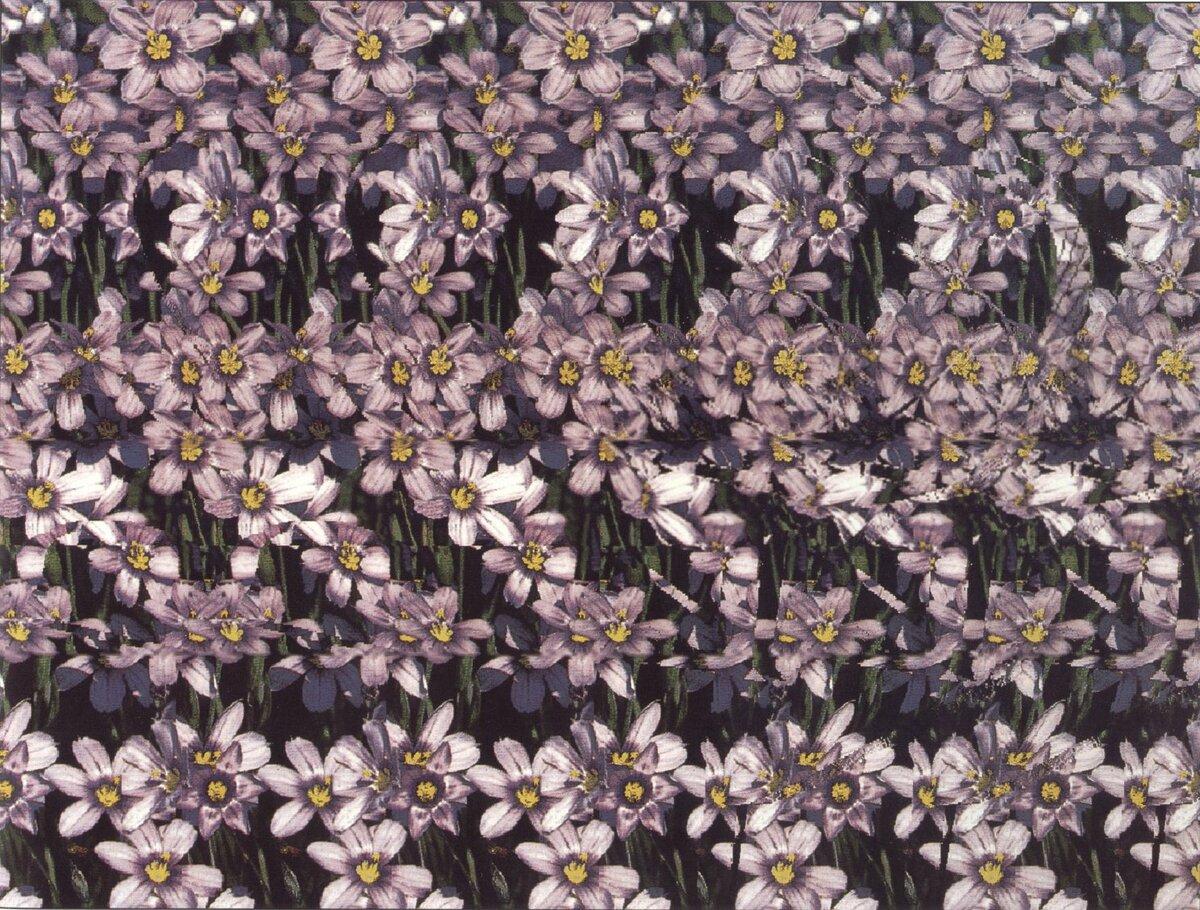 Картинки стерео с цветами орхидеи