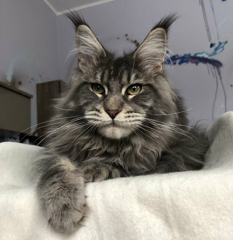 Картинки хорошенькие котята поршня