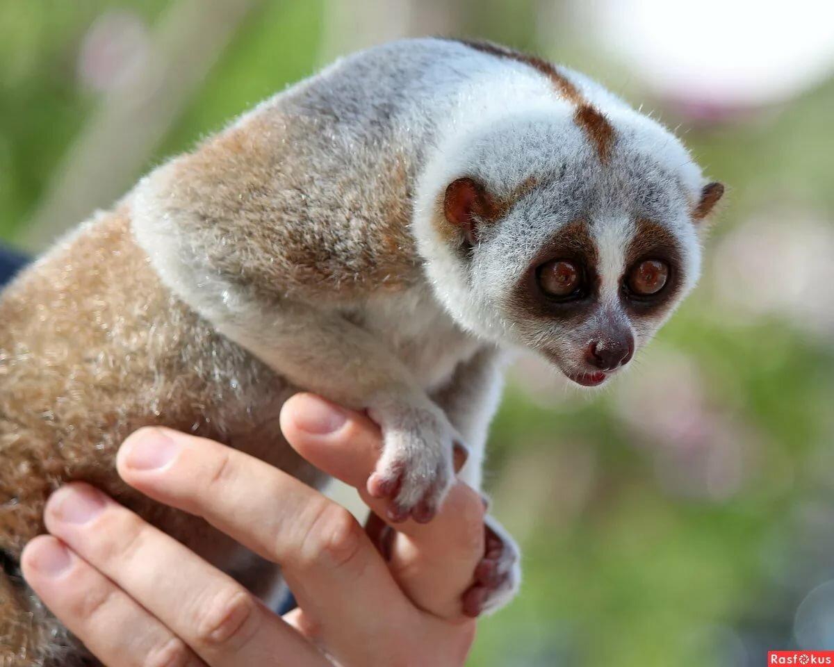 Картинки экзотических животных