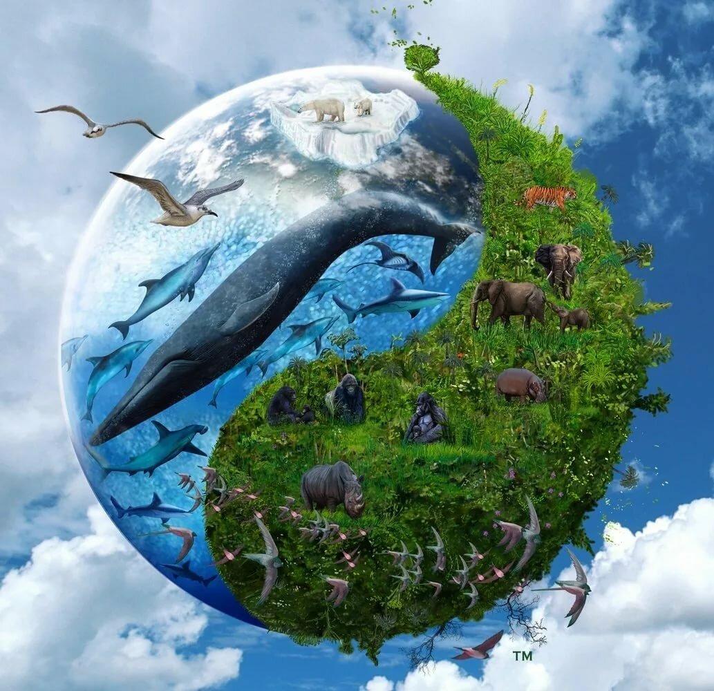 Картинка планета земля природа