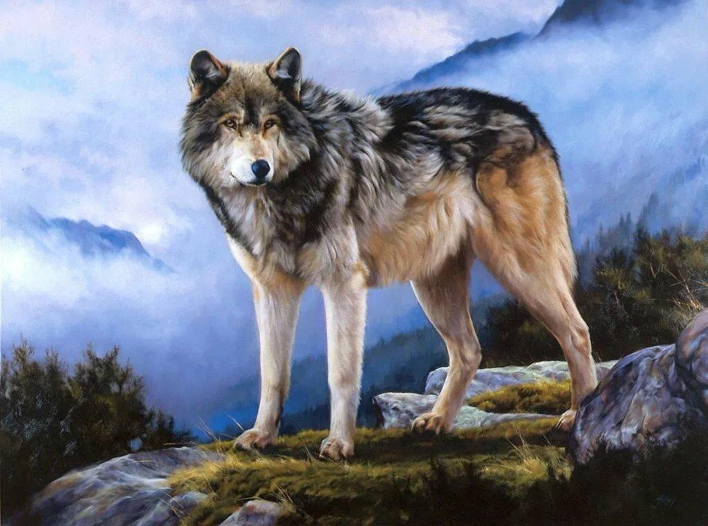 материала картинки волков исторические пересечении шести