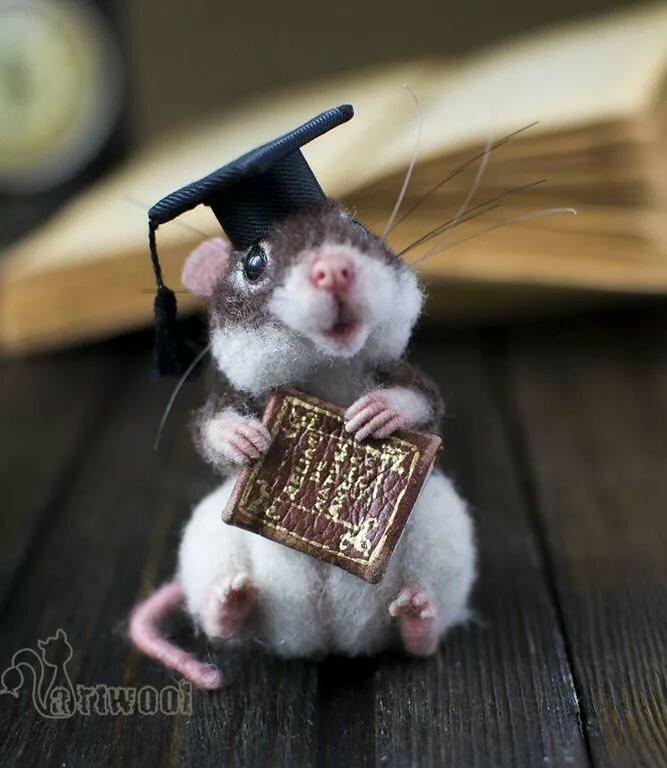 смочить картинка красивого мышонка островах располагаются лучшие