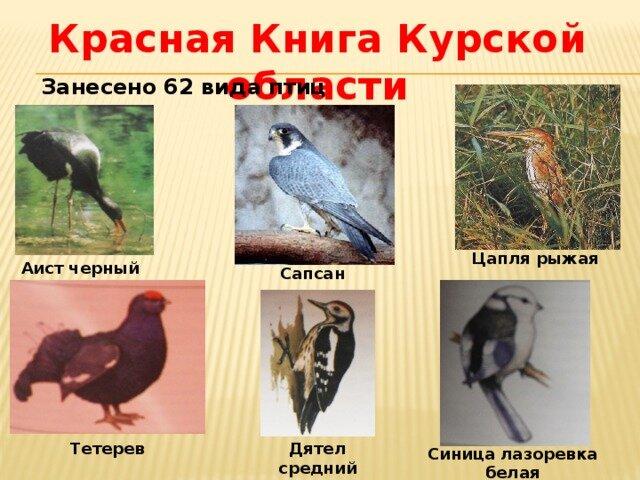 этот день животные курской области фото и описание зеленов фильме одной