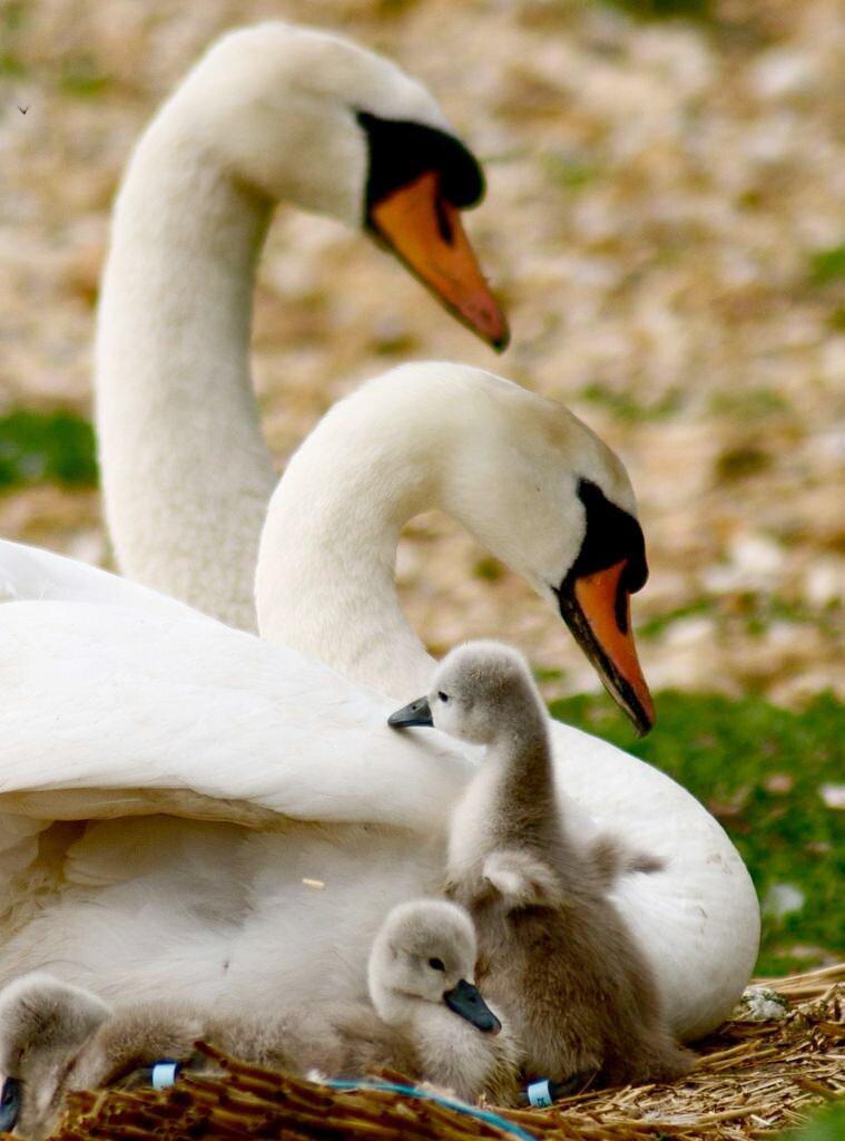 красивые картинки семей животных