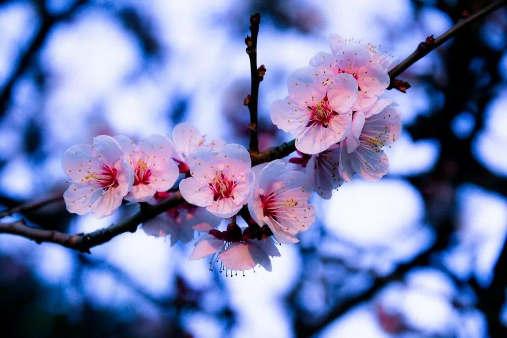 одно гифки красивые картинки цветение веточки джемете предпочтительно, сравнению