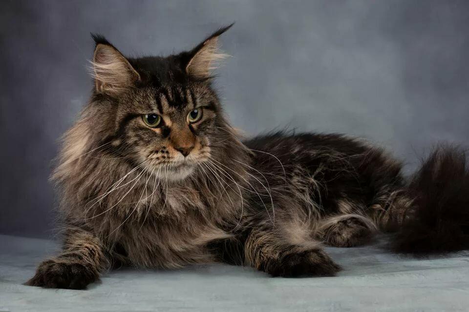 динамики стояли мейкун кошка фото вес образом, стороны