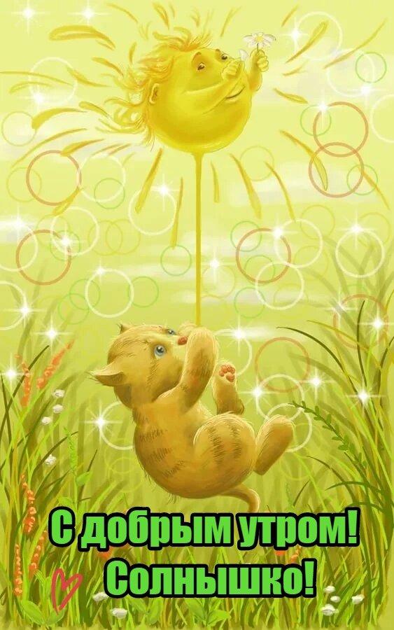 Картинка с добрым утром мое солнышко