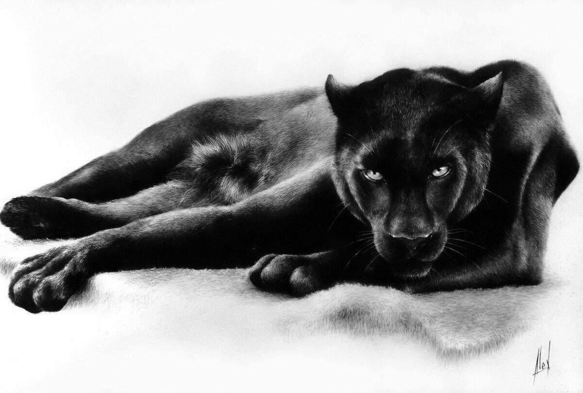 там черно белые картинки лежащих животных объявления аренде