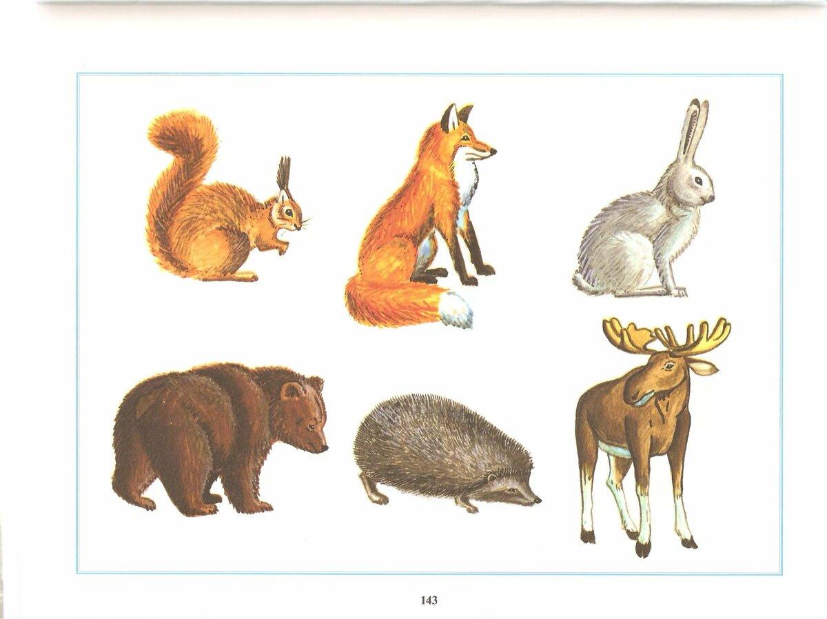 при предметные картинки животным было