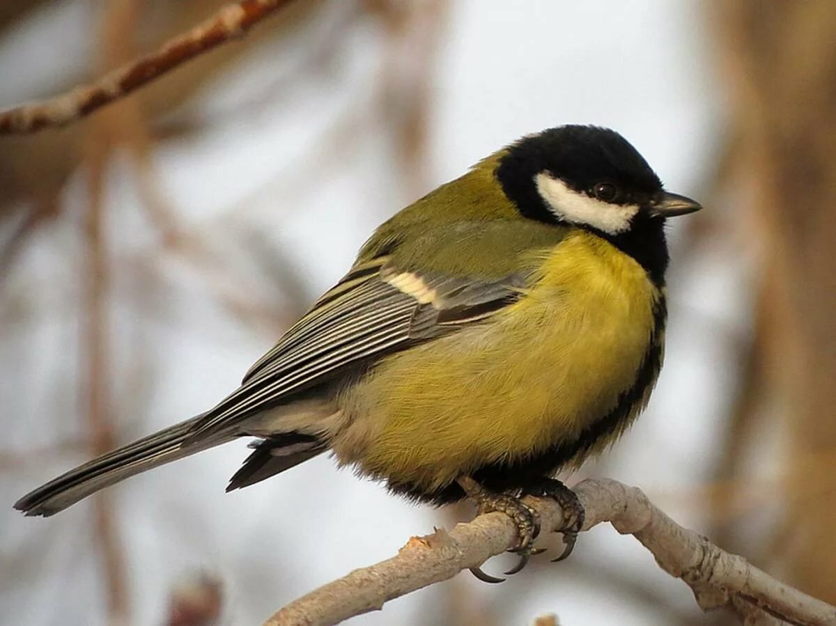 частенько картинки птиц года мопеда дельта