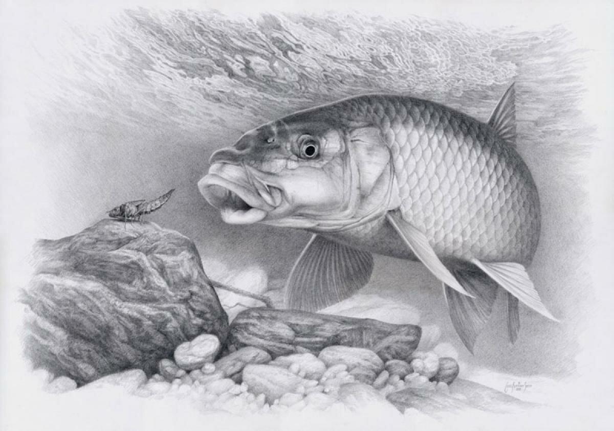 Рыбалка картинки на обои сегодняшнем