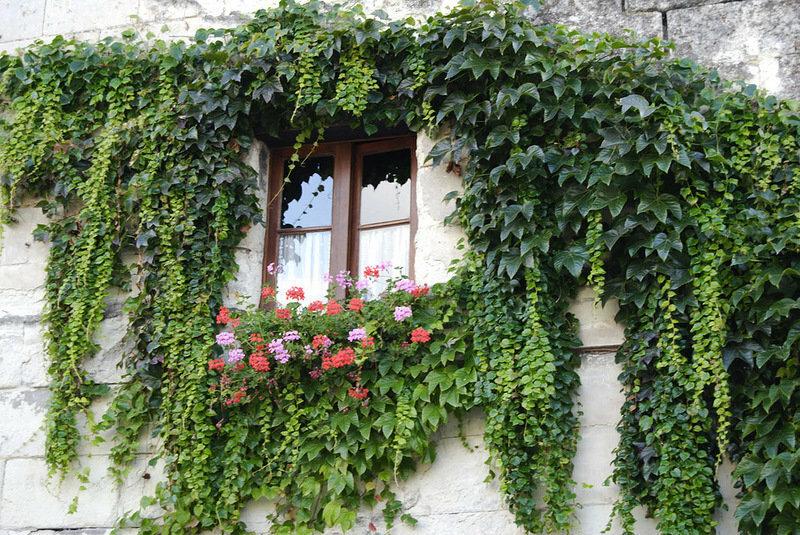 Как расставить красиво растения дома фото следующего нового