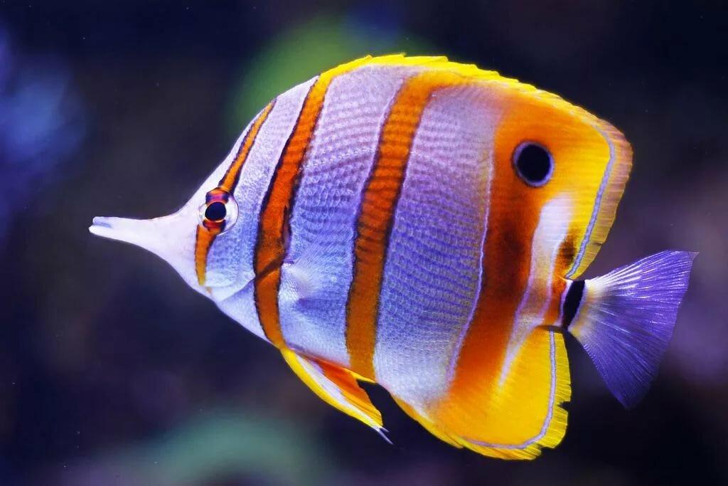 Разные картинки рыбки
