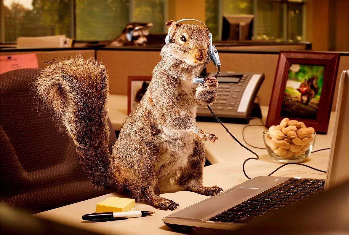 Прикольные картинки животных и работа