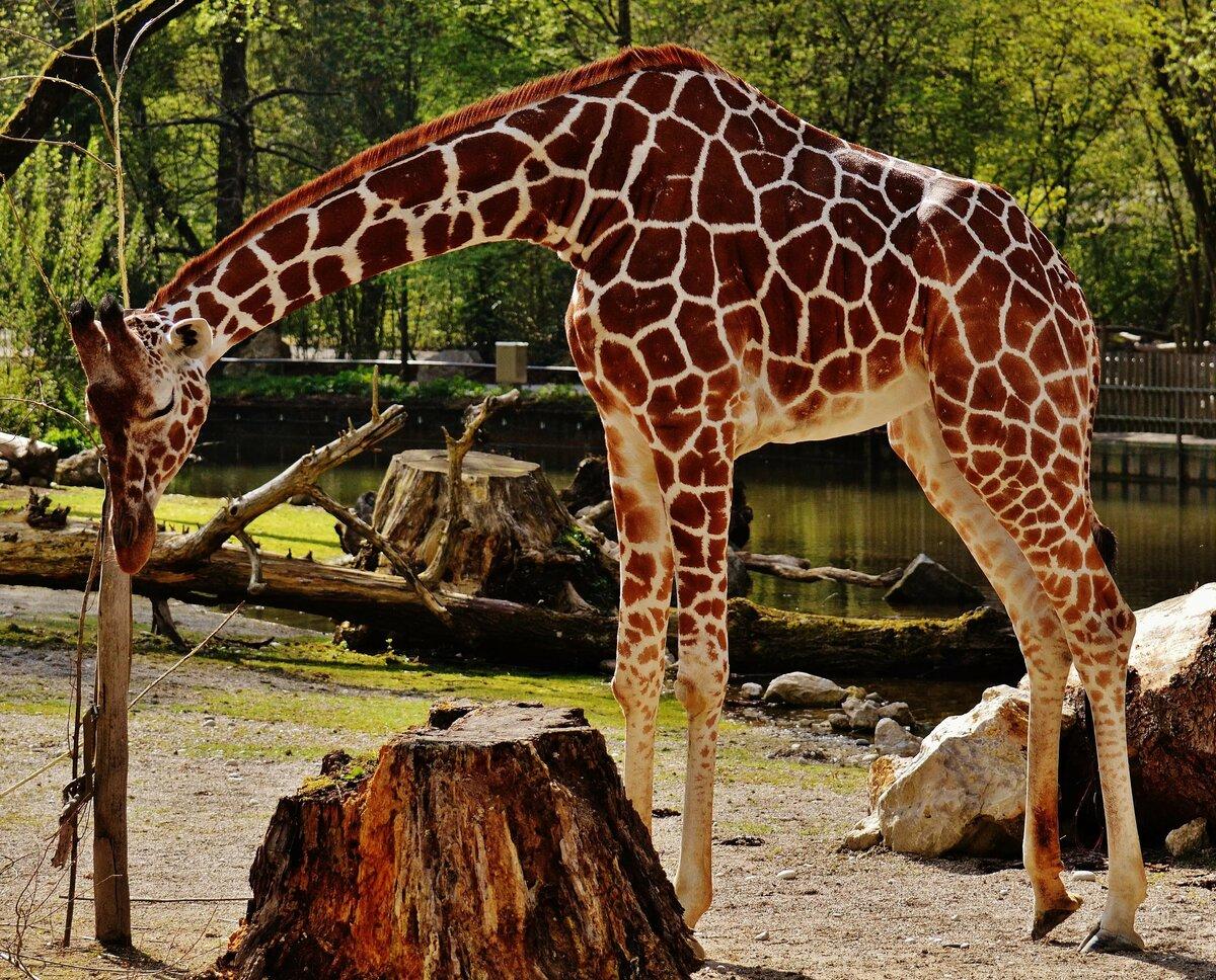 Картинки обитателей зоопарка